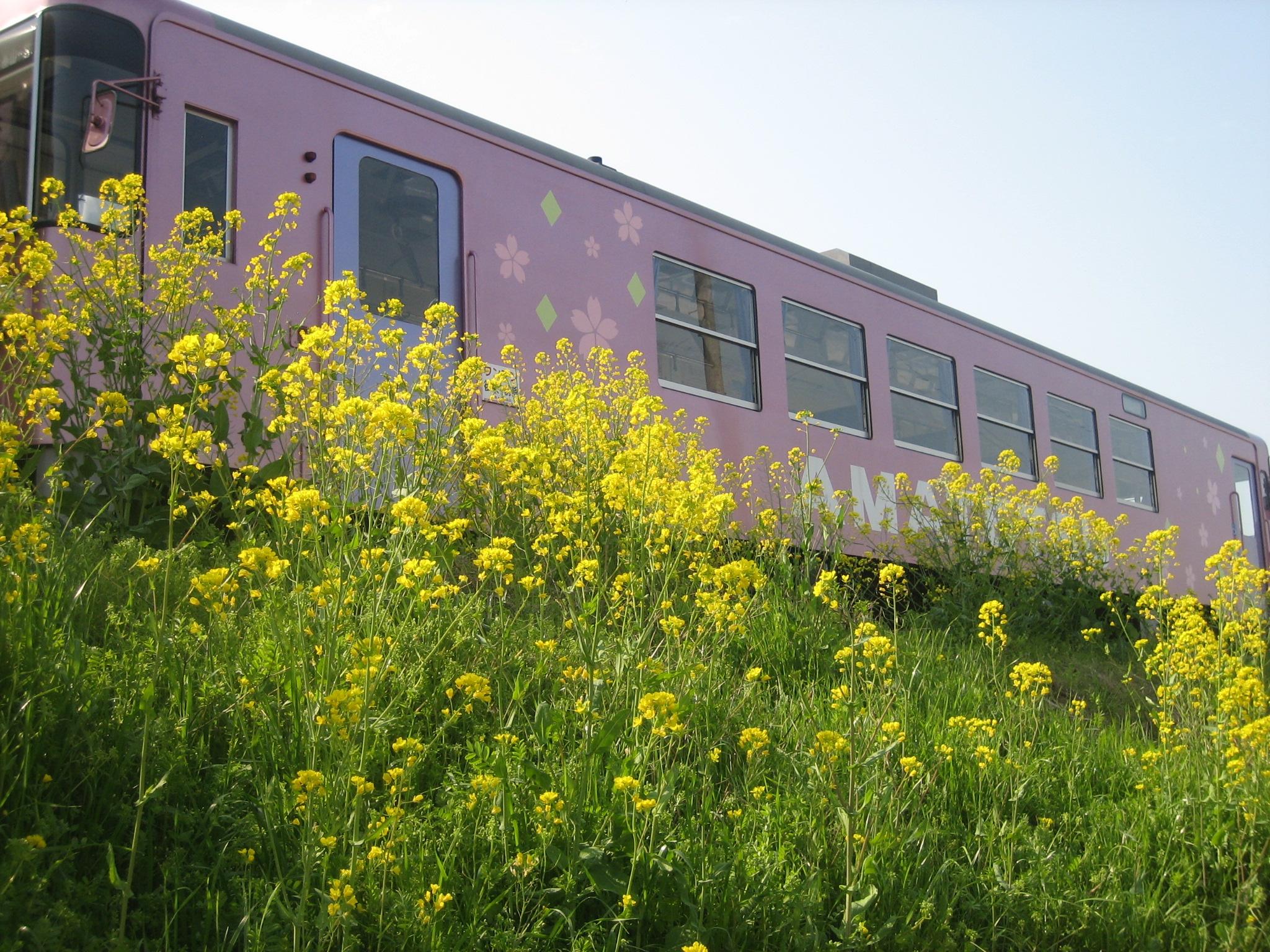 AR306号と菜の花