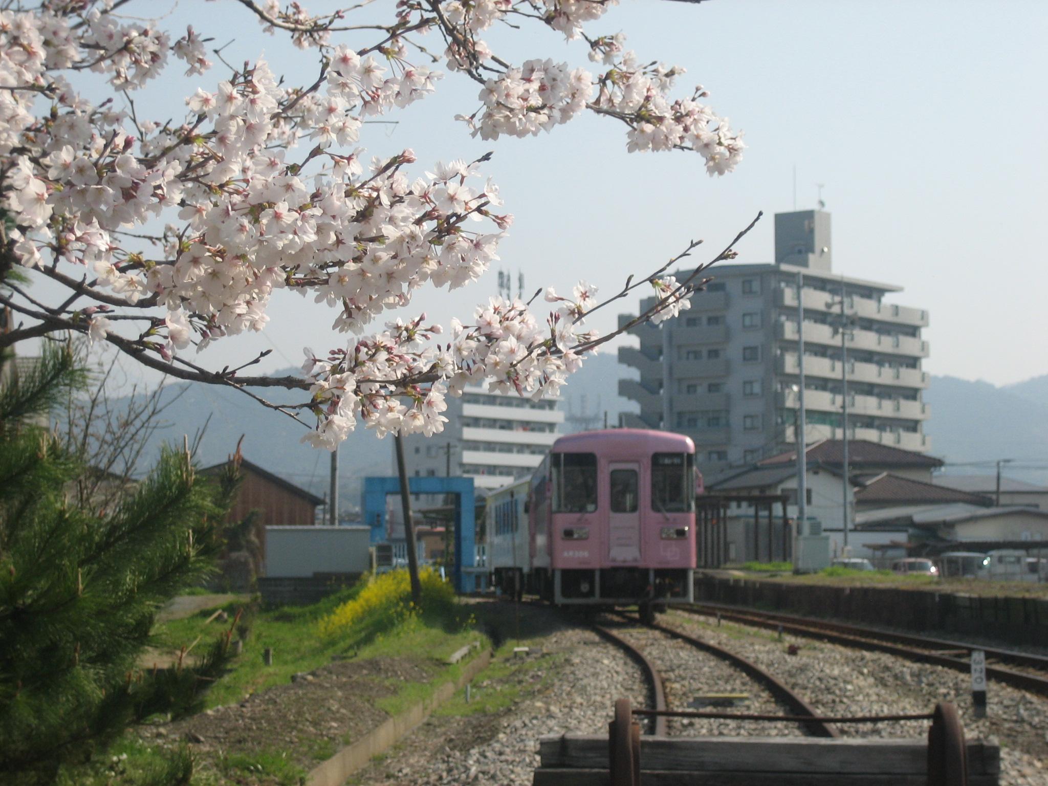 AR306号と桜