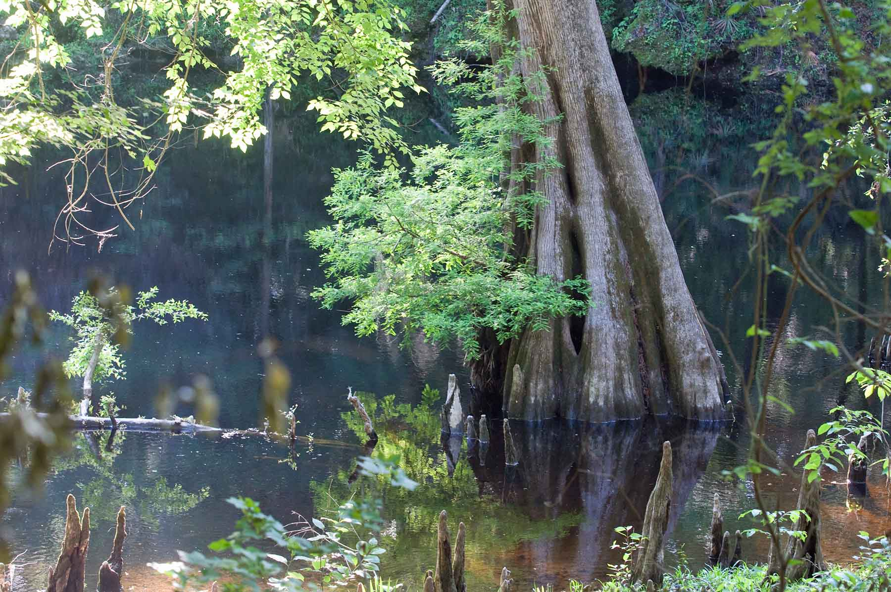 Suwannee River State Park, Florida