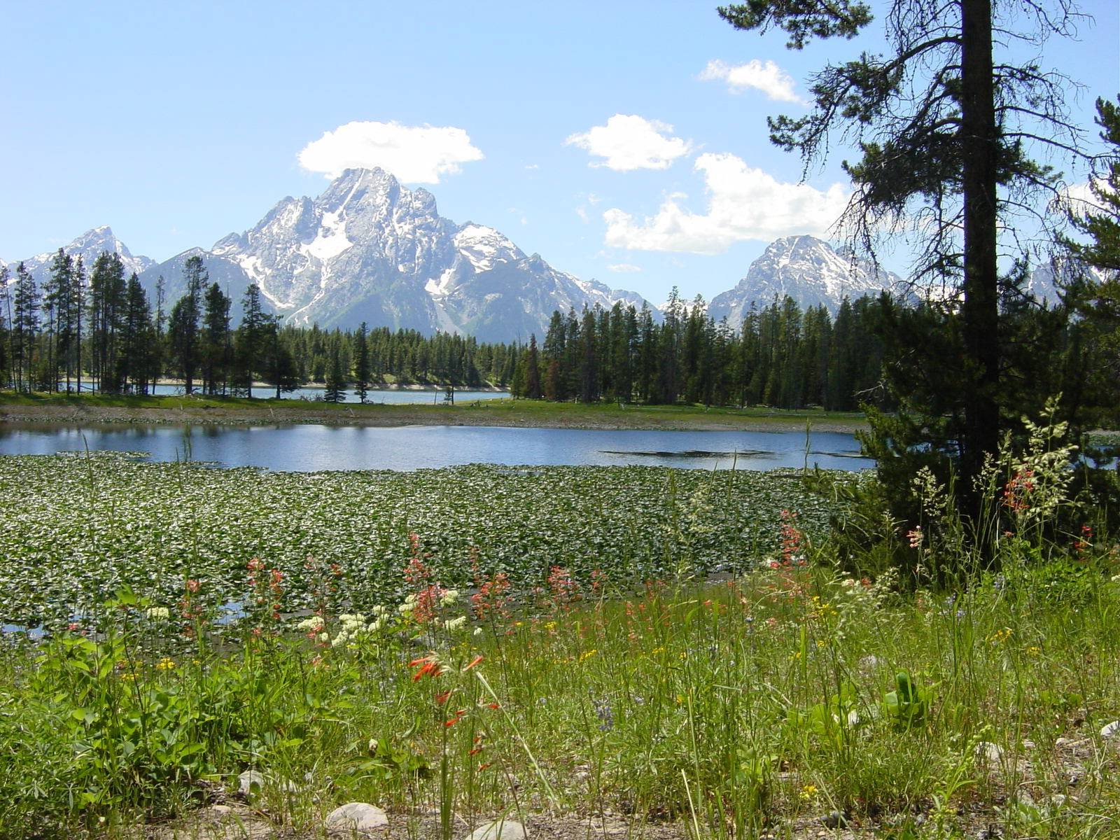 Swan Lake - Grand-Teton-Nationalpark