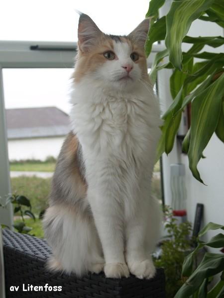 Bella mit 1,5 Jahren