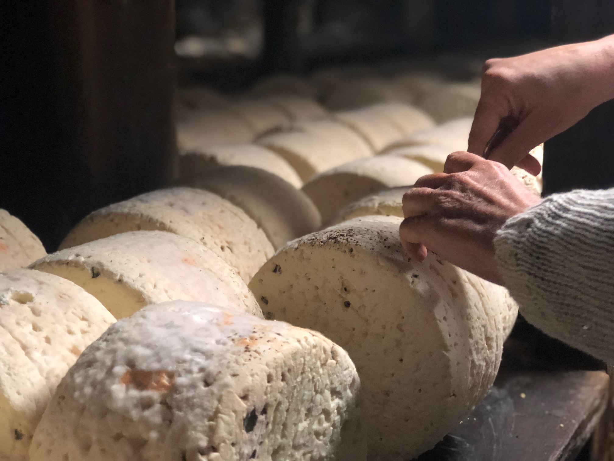 Caves de notre Roquefort Carles, dernier artisan fabricant de Roquefort