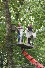 Nistkastenaktion für den Waldkauz wird auch vom Gartenrotschwanz angenommen