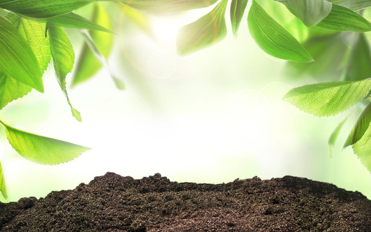Garten Clauss Esslingen Ihr Fachgeschäft Rund Um Den Gartenbedarf