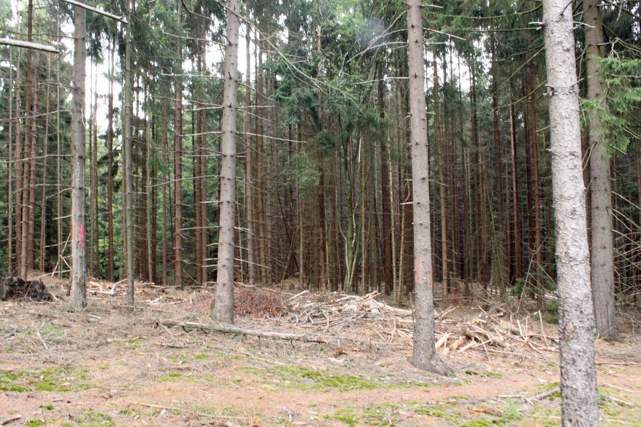 Hoher Wald - am Rand des Windbruches