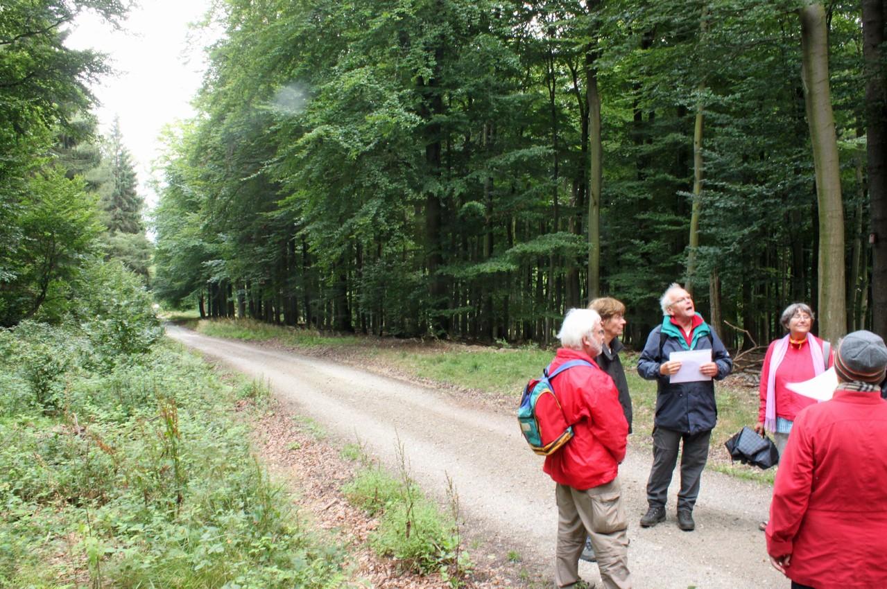Taunussteiner Buchenwald am Trompeterweg