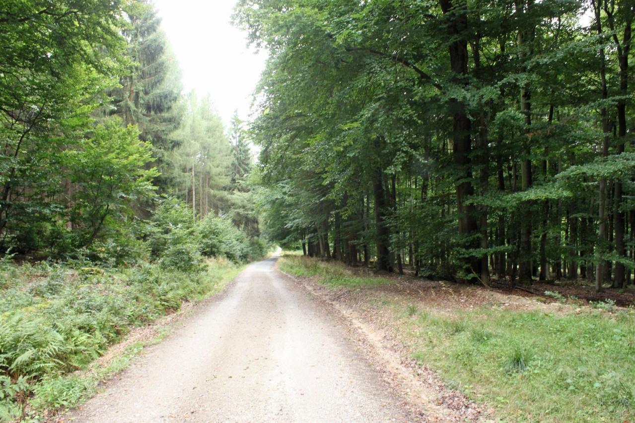 Blick auf gut ausgebauten Trompeterweg Richtung Jagdschloss Platte