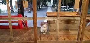 猫がお経を聞く様子
