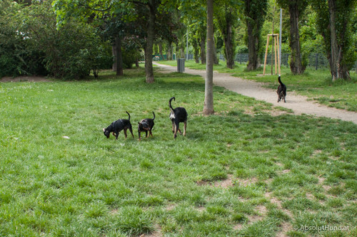 Hundezone, 1230 Wien, Wohnparkstraße, Alt-Erlaa