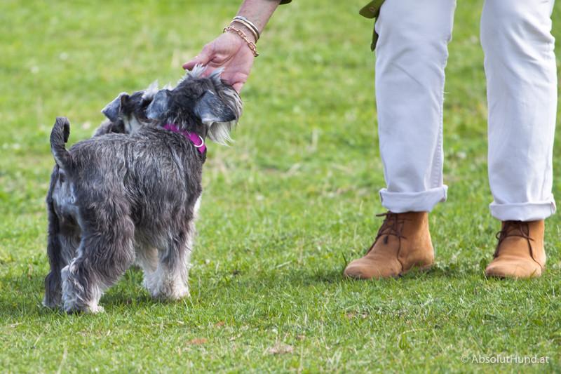 Hunde die wahren Kommunikationsprofis - AbsolutHund.at