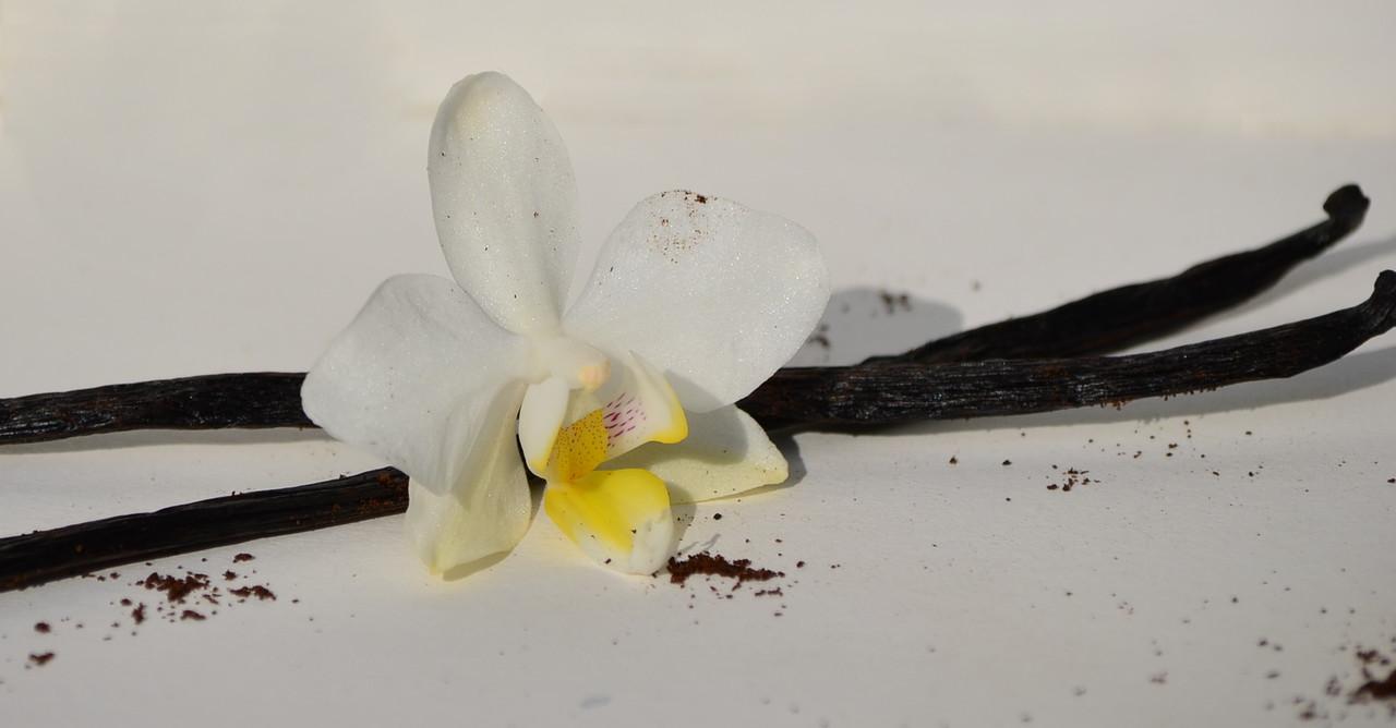 bourbon vanille kaufen gemahlene vanille vanilleschoten kaufen vanillestangen kaufen. Black Bedroom Furniture Sets. Home Design Ideas
