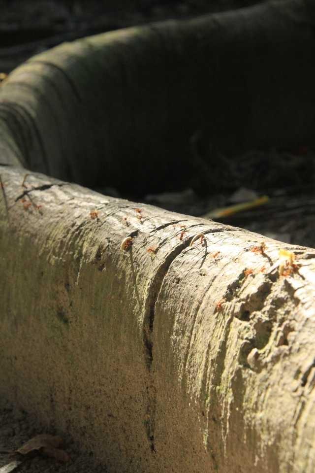 Ants highway