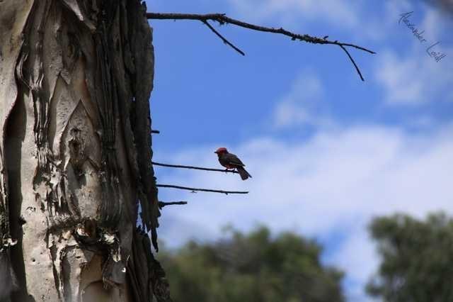 Sitting bird (1)