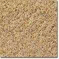 "Cut Pile Carpets ""Friezé"""