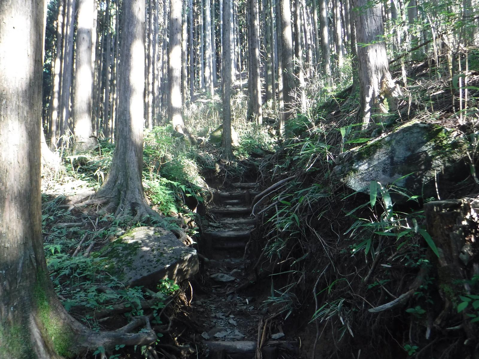 下部の登山道はえぐれている個所がある