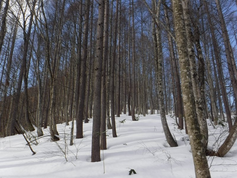 悪くない林間コース