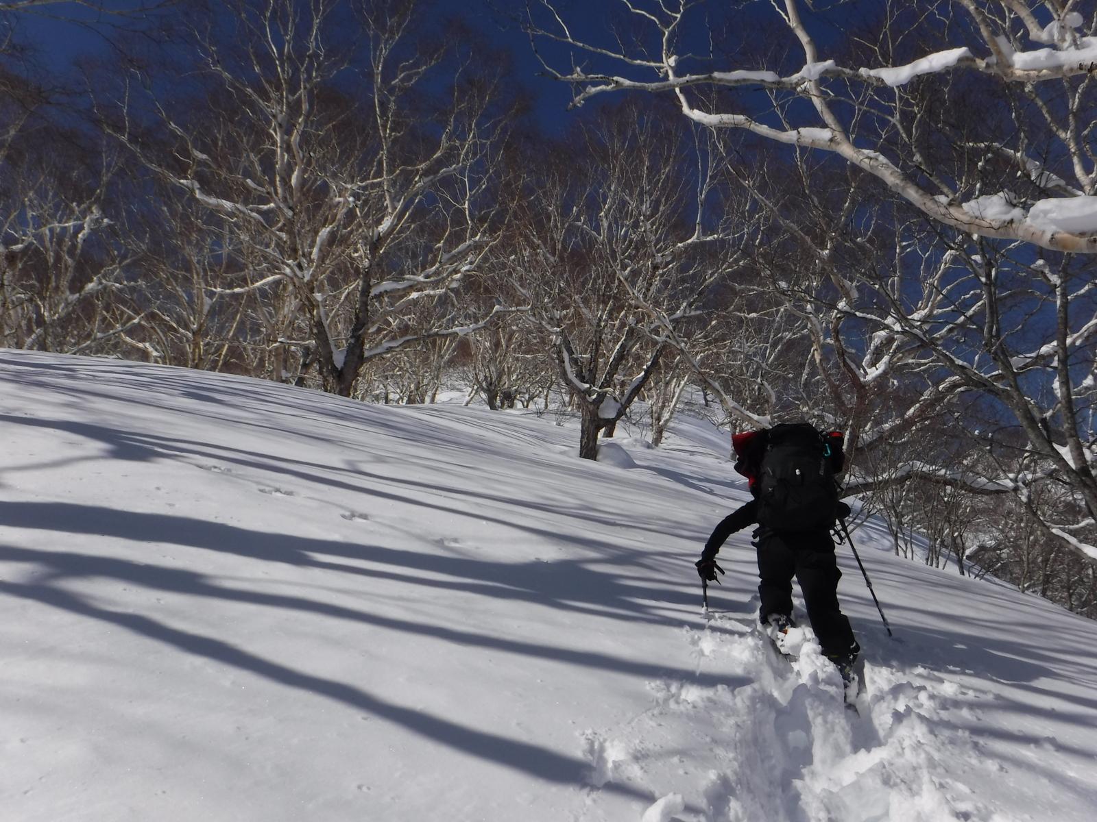 10:50 林道上で斜度が増す、この辺りで雪洞制作
