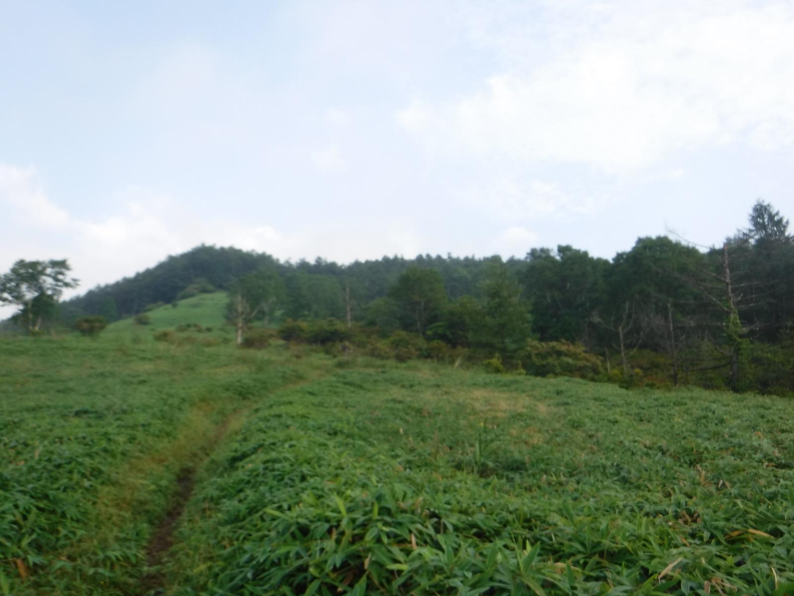 笹原の中、緩い登りが続く