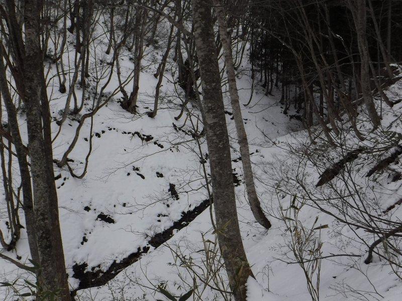 下部は浅い沢に沿って登る。雪が多ければ沢沿いは登り易そう
