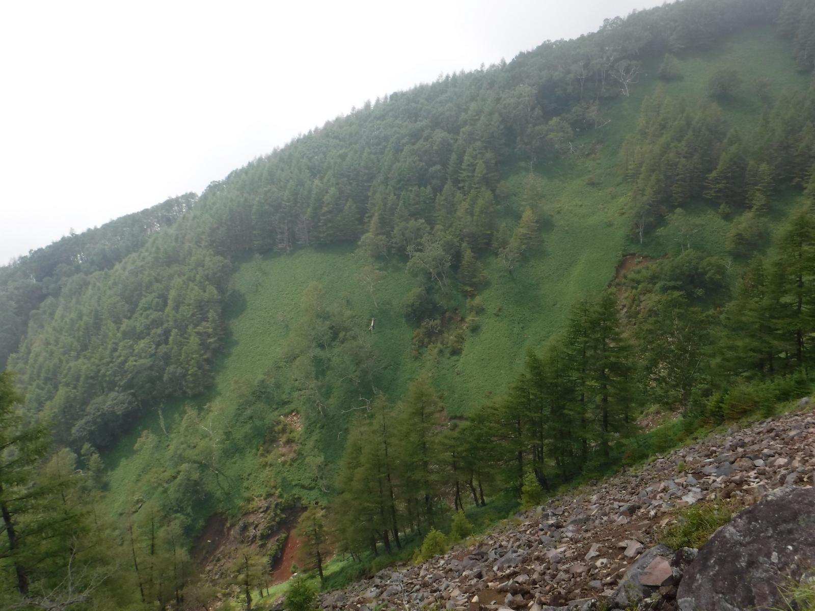 山頂下の、急な笹原、獣道らしき跡がある