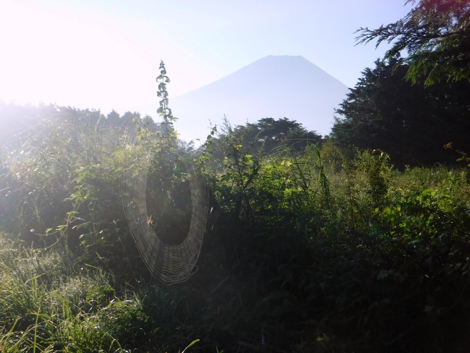 富士山とクモの巣