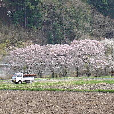 春の久々野町 田植え前の水田