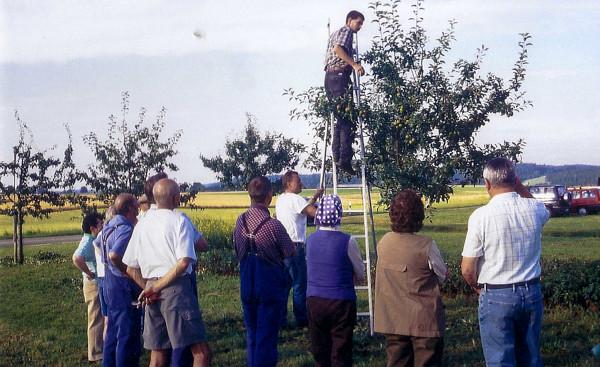 Baumschneidelehrgang, mit Kreisfachberater Keller, 1999