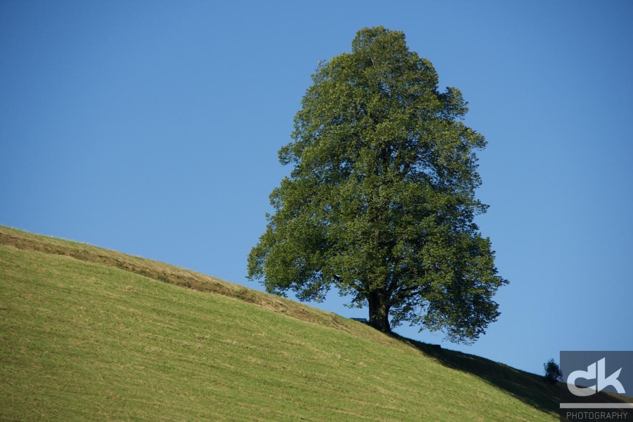 "Monatsbaum ""Juni"" (Juli 2016, Emmental, Schweiz)"