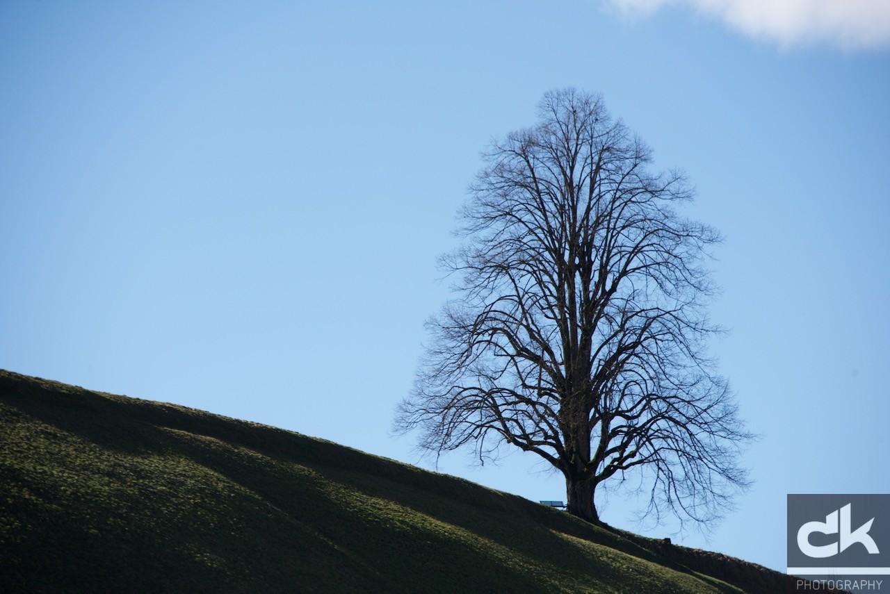 "Monatsbaum ""Februar"" (Februar 2016, Emmental, Schweiz)"