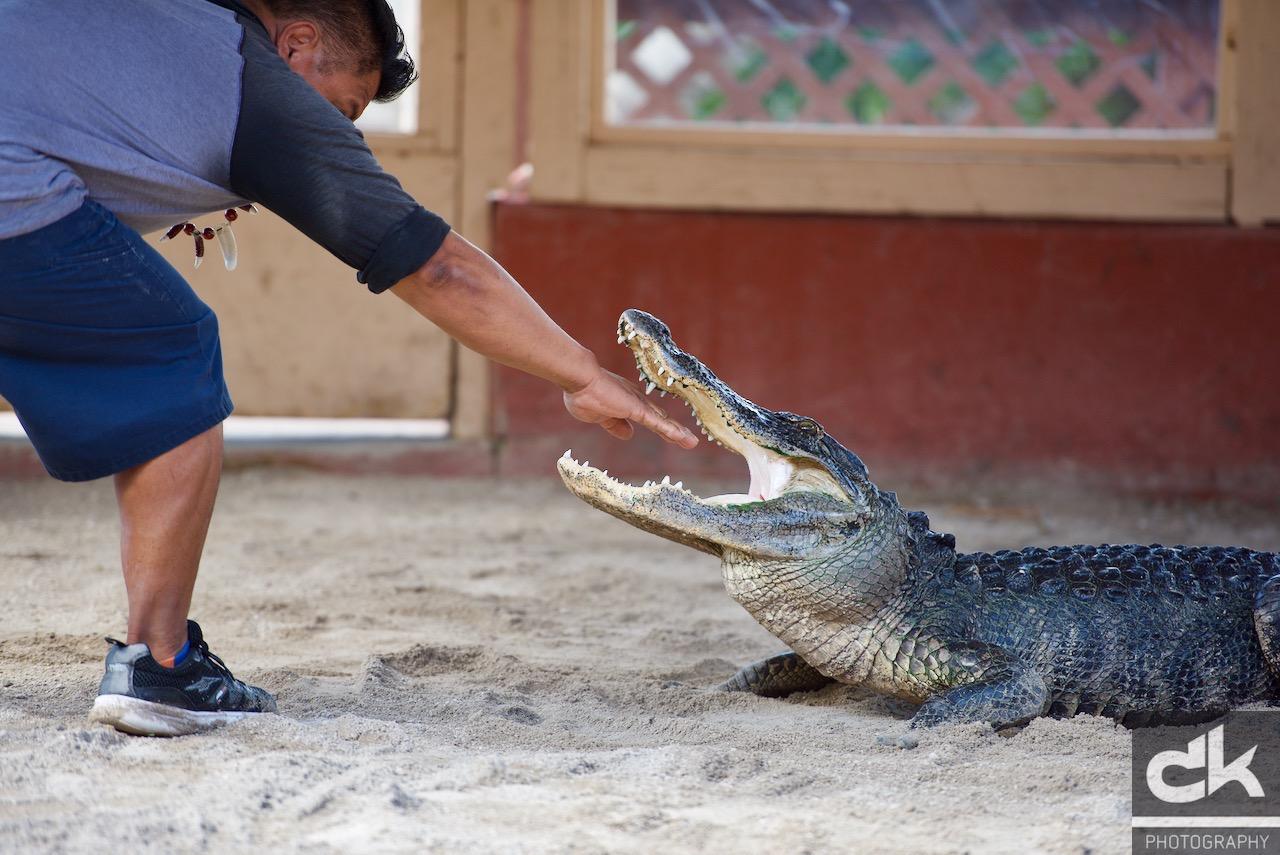 Hand im Mund (und nein, der Alligator war nicht betäubt)