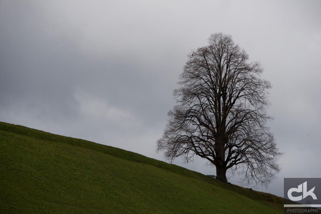 "Monatsbaum ""November"" (November 2015, Emmental, Schweiz)"
