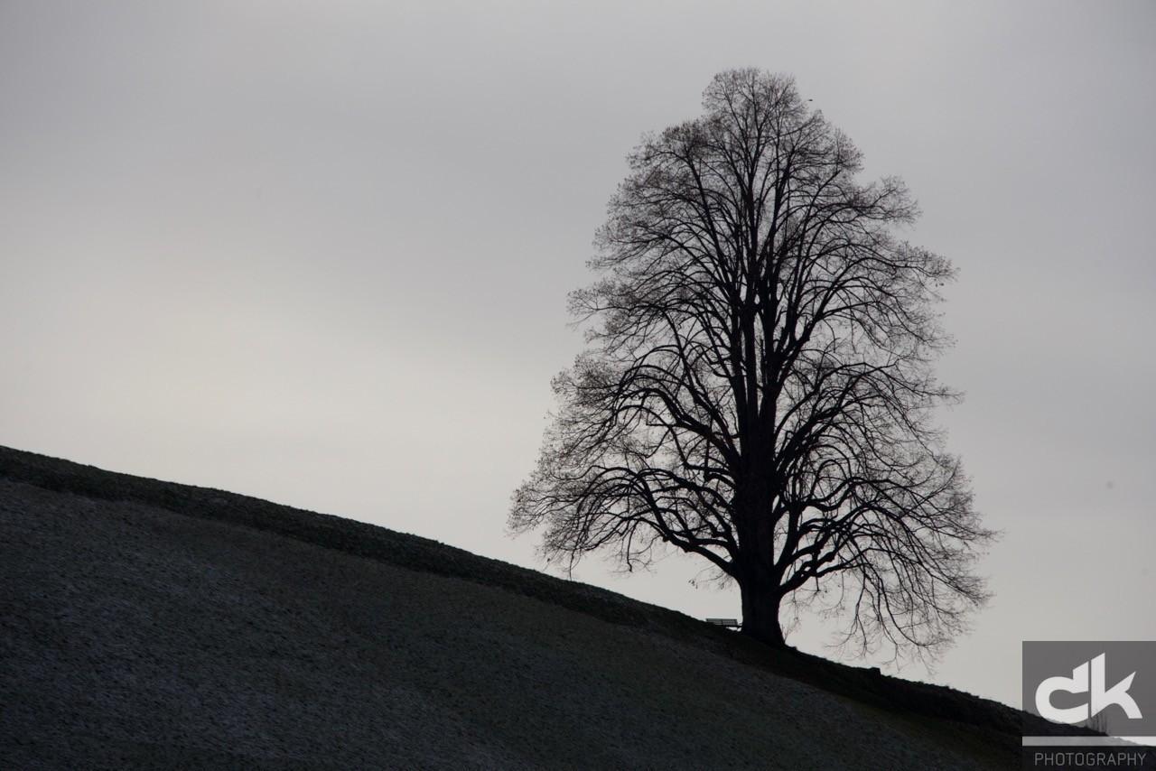 """Monatsbaum """"Dezember"""" (Dezember 2015, Emmental, Schweiz)"""