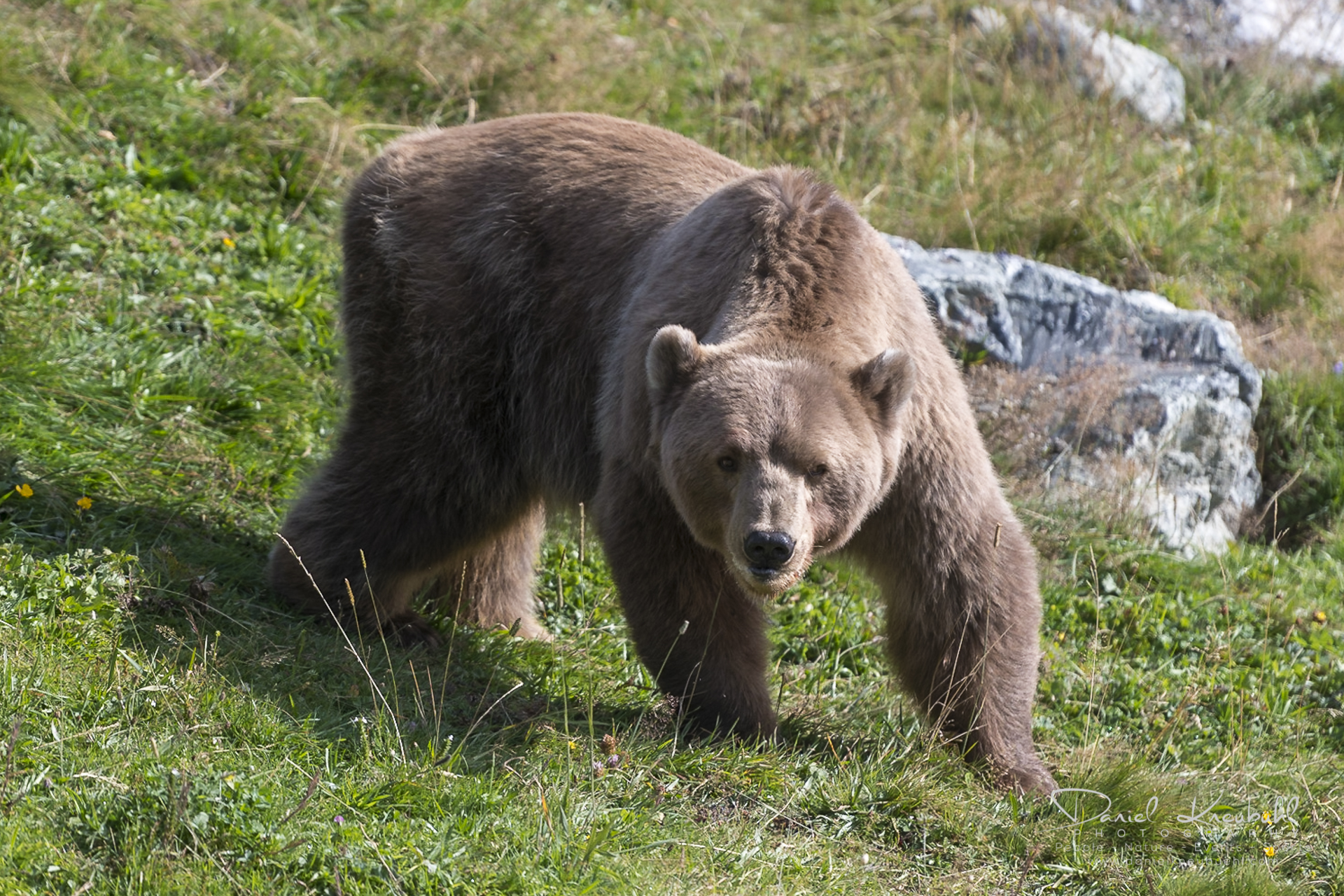 Bärenland Arosa