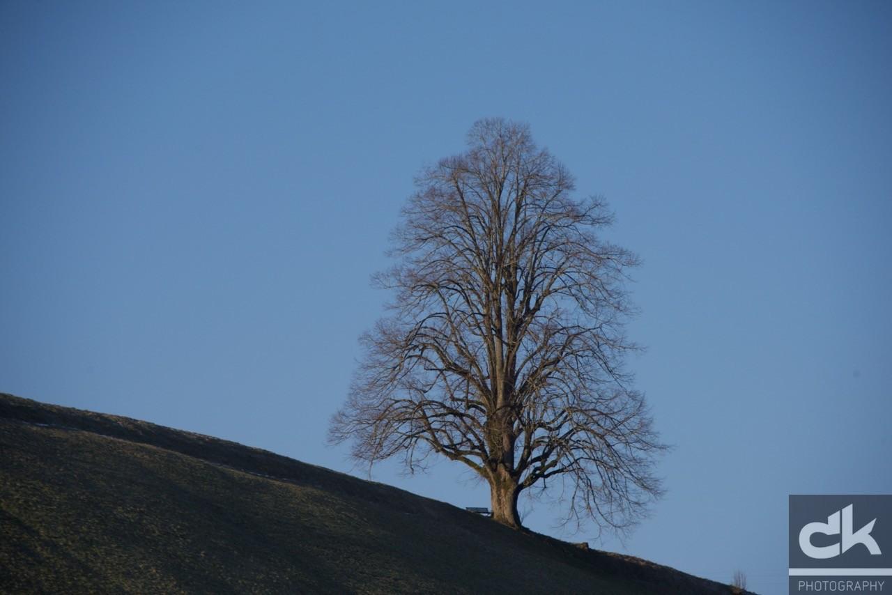 """Monatsbaum """"März"""" (März 2016, Emmental, Schweiz)"""