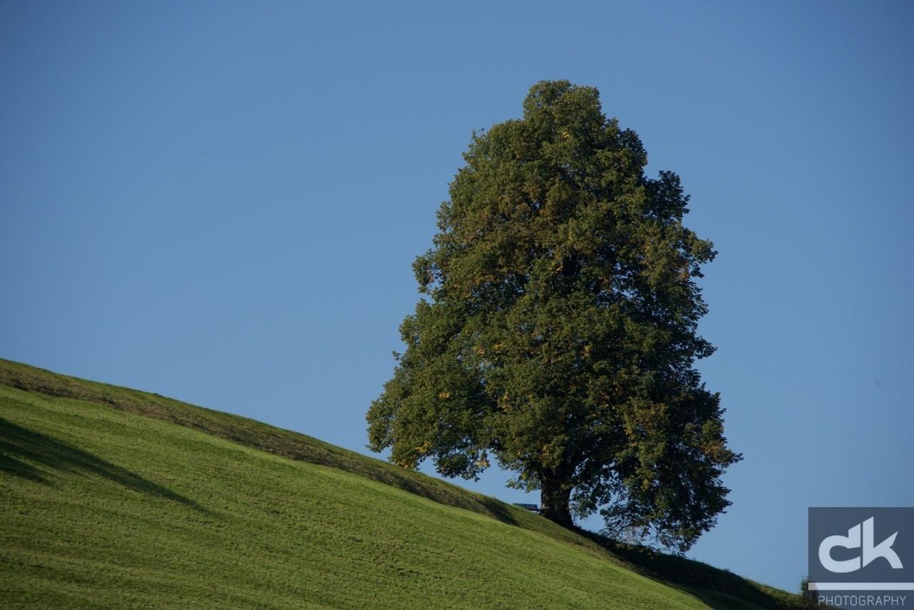 """Monatsbaum """"August"""" (August 2015, Emmental, Schweiz)"""