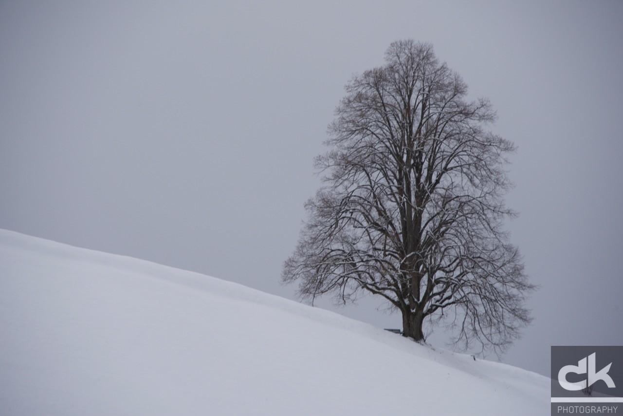 """Monatsbaum """"Januar"""" (Januar 2016, Emmental, Schweiz)"""