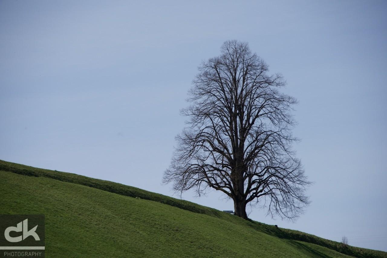 "Monatsbaum ""April"" (April 2016, Emmental, Schweiz)"
