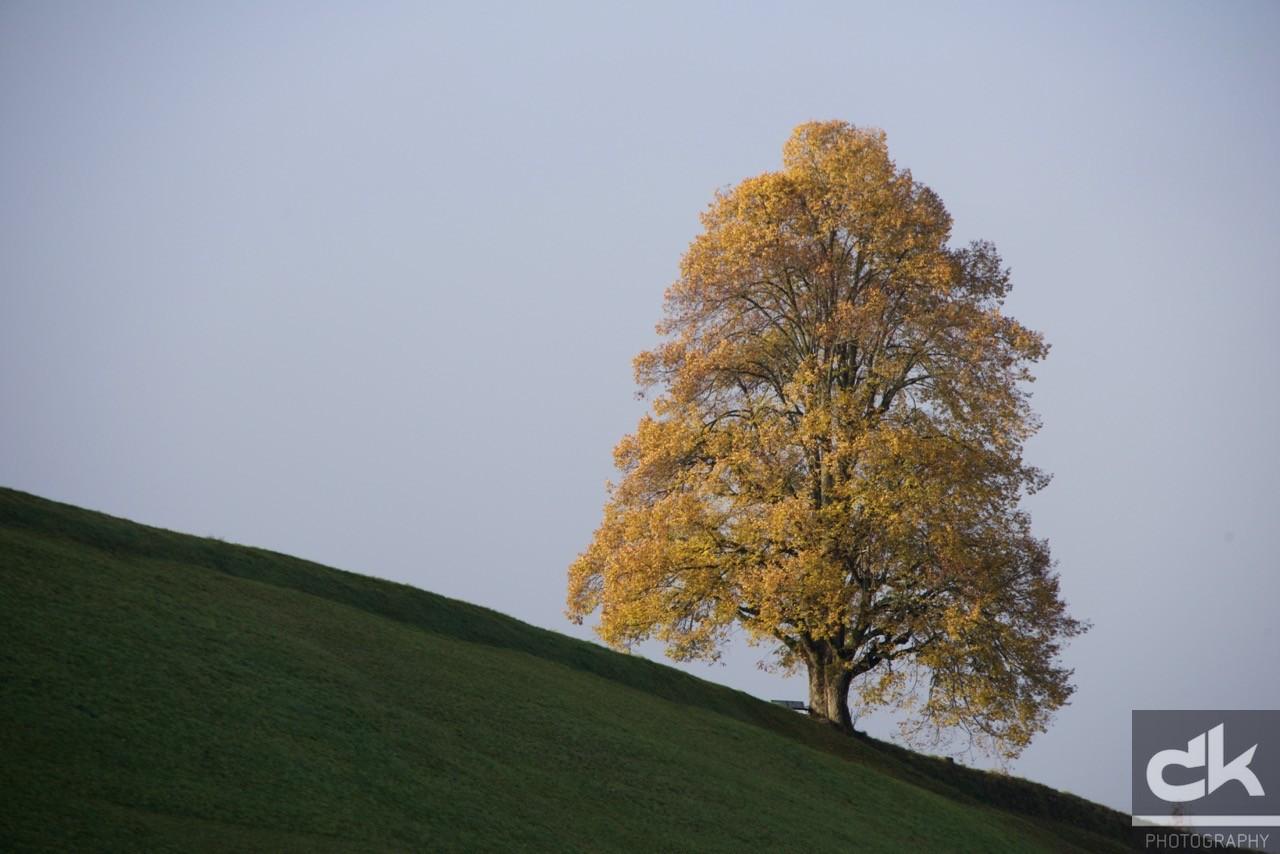 "Monatsbaum ""Oktober"" (Oktober 2015, Emmental, Schweiz)"