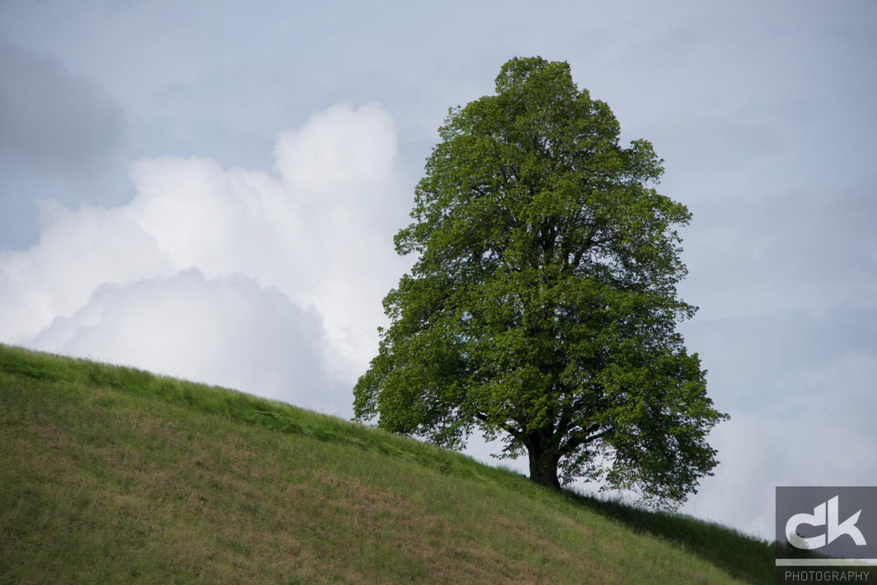 "Monatsbaum ""Juni"" (Juni 2016, Emmental, Schweiz)"