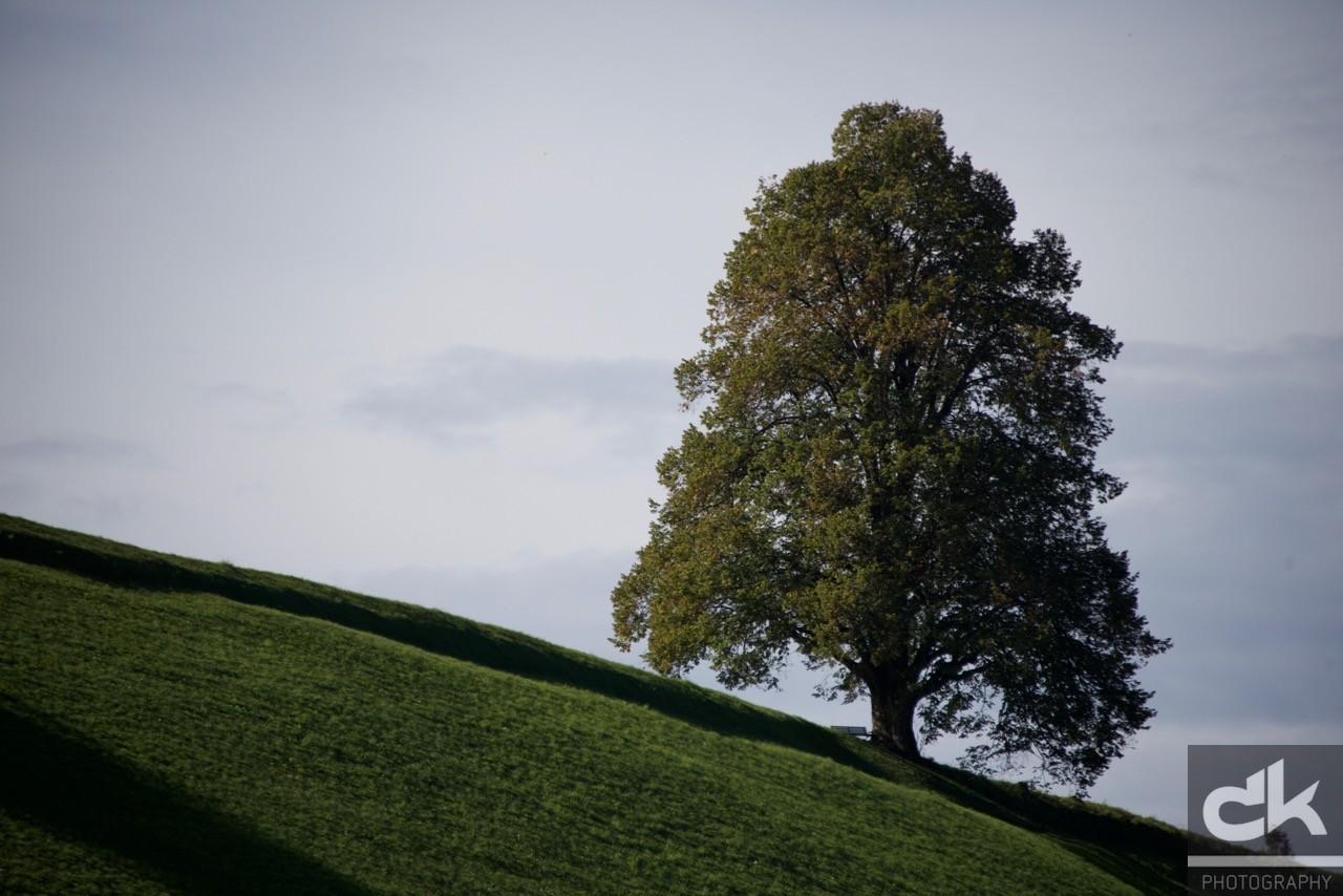 """Monatsbaum """"September"""" (September 2015, Emmental, Schweiz)"""