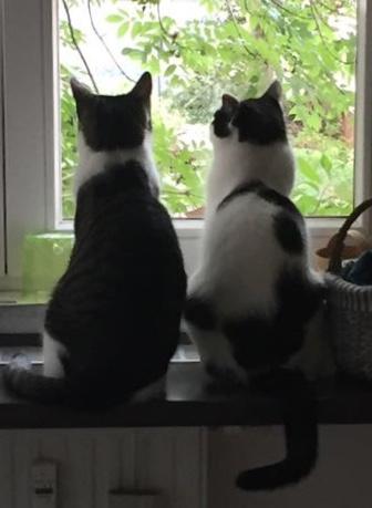 Oskar & Hugo