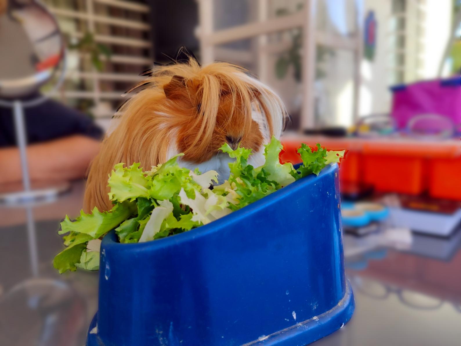 La Vida en un Cubo de Vegetales