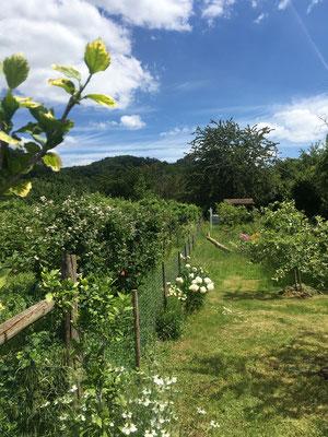 Sommerlicher Garten mit hübschen Blumen- Jungfer im Grünen (Dagmar Schülke)