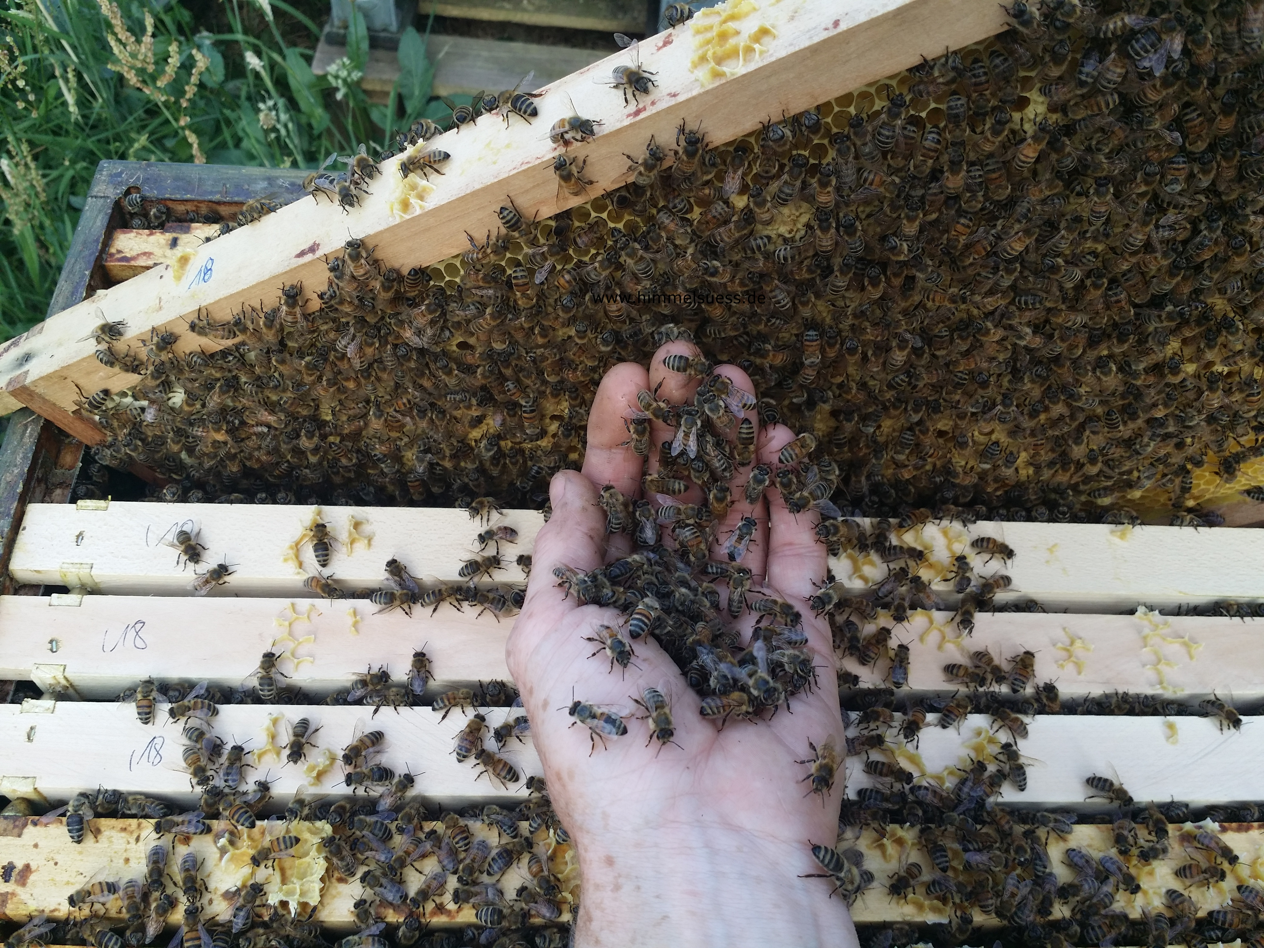 Imkerei himmelsüß Bienen zum Anfassen