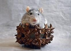 "Ratte im ""Nest"""