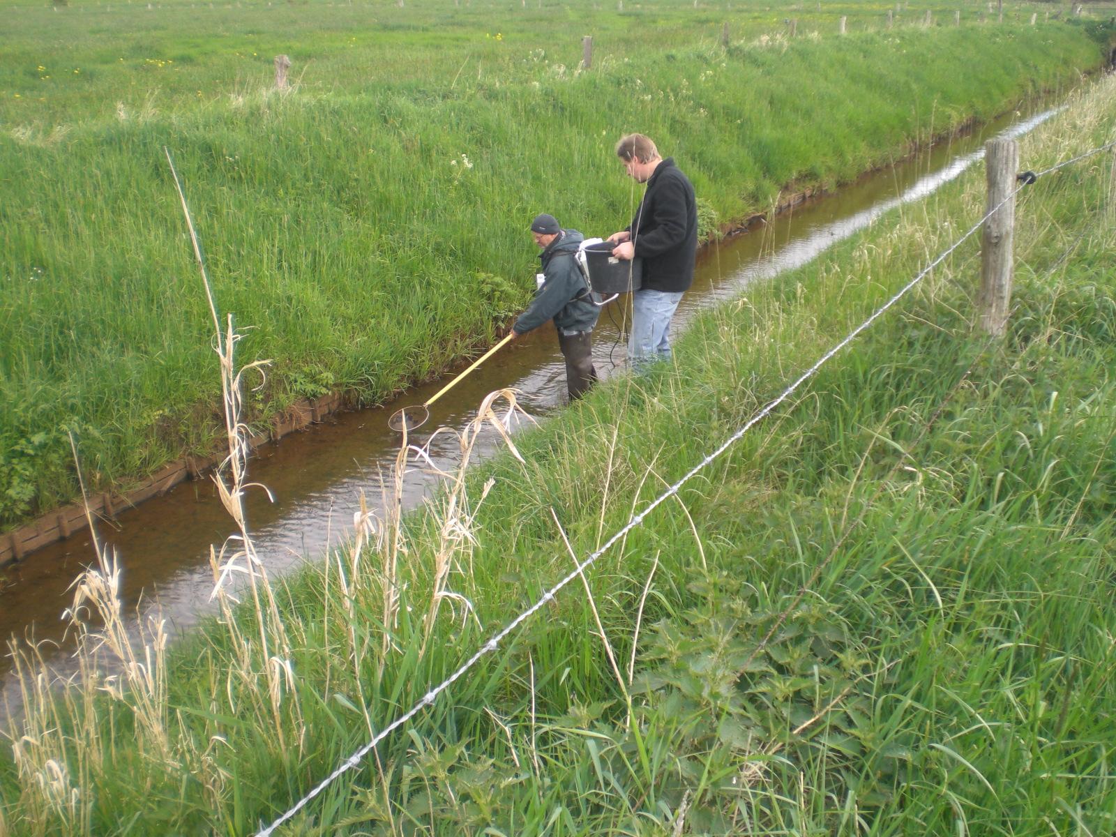 Fischbestandserfassung mittel Elektrofischerei. Foto: Herbert Müller, SFV Varel.