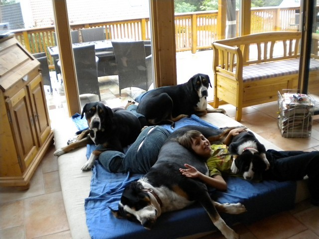 Gut sozialisierte Hunde leben miteinander im Menschenrudel