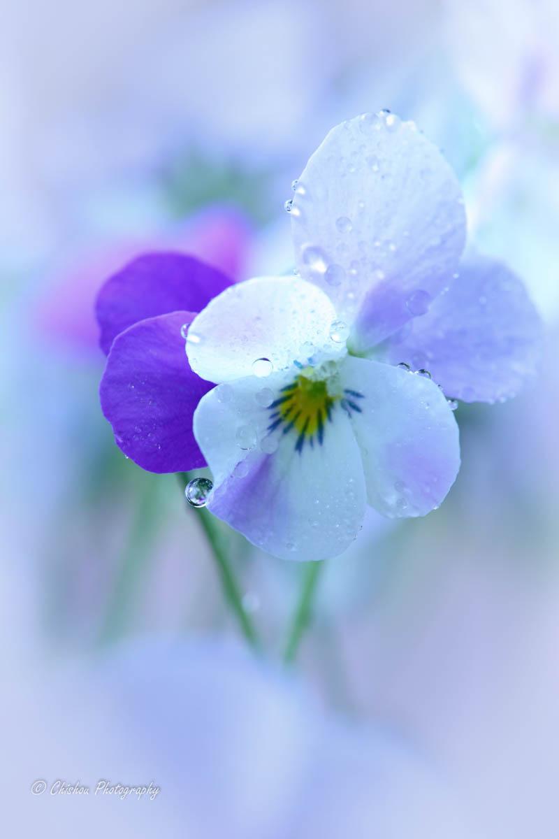 【春陽(しゅんよう)】春の日光。