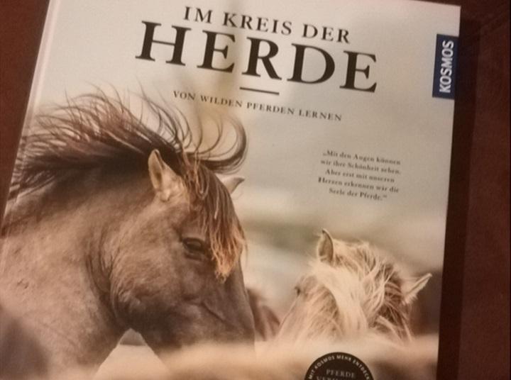 Im Kreis Der Herde Von Wilden Pferden Lernen Buch Von
