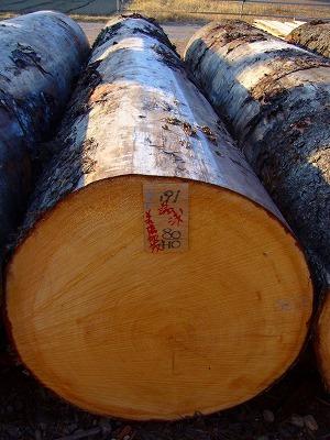 厳選した木材の丸太を購入